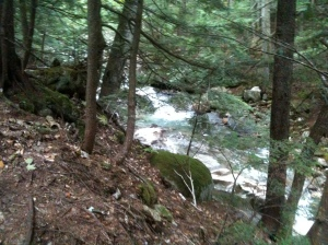The 19 Mile Brook Trail in the Carter Range