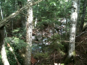 The Bushwhack from the Imp Trail to the 19 Mile Brook Trail