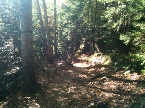 Terrain on the Lonesome Lake Trail