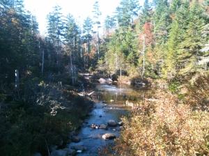 Cascade Brook Bog